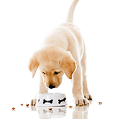 link to Choosing the Right Kind of Dog Food