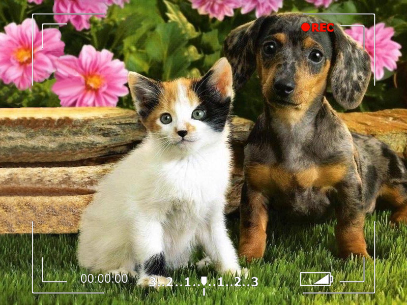 Cutest Pet Video Contest