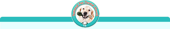Dental Month