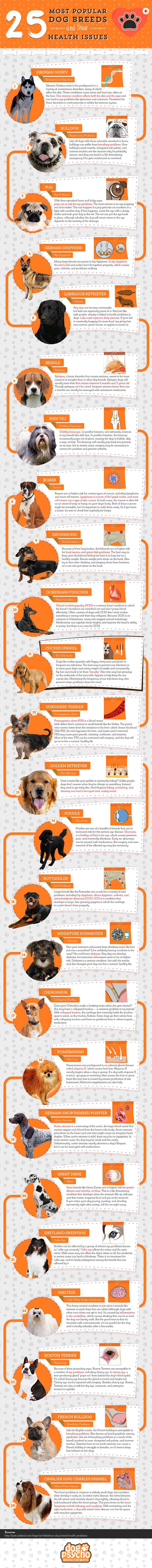 Popular Dog Breeds And Their Health Issues Infographic