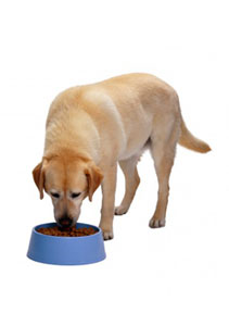 Healthy foods make a healthy dog!