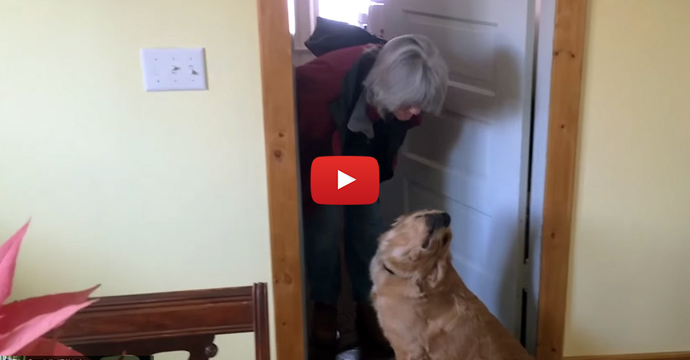 golden retriever hilariously refuses to give his mom a kiss entirelypets. Black Bedroom Furniture Sets. Home Design Ideas