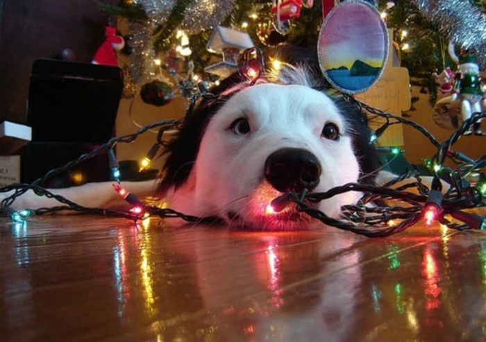 Christmas tree dog
