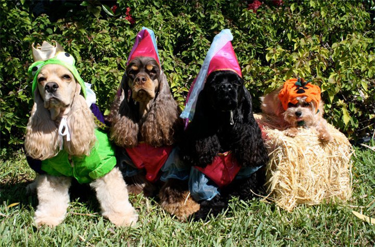 Finding The Perfect Halloween Costume For Your Pet