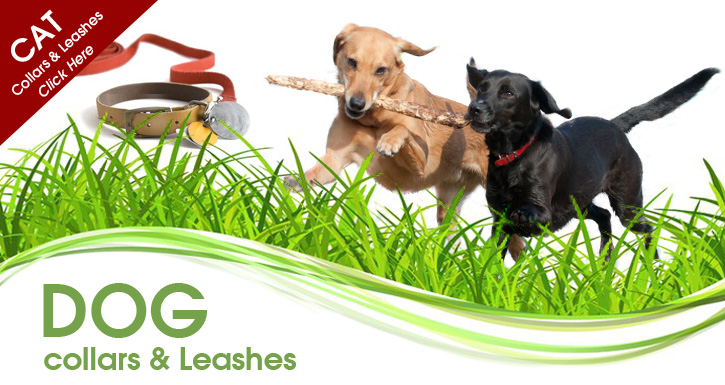 Dog Collars Amp Leashes