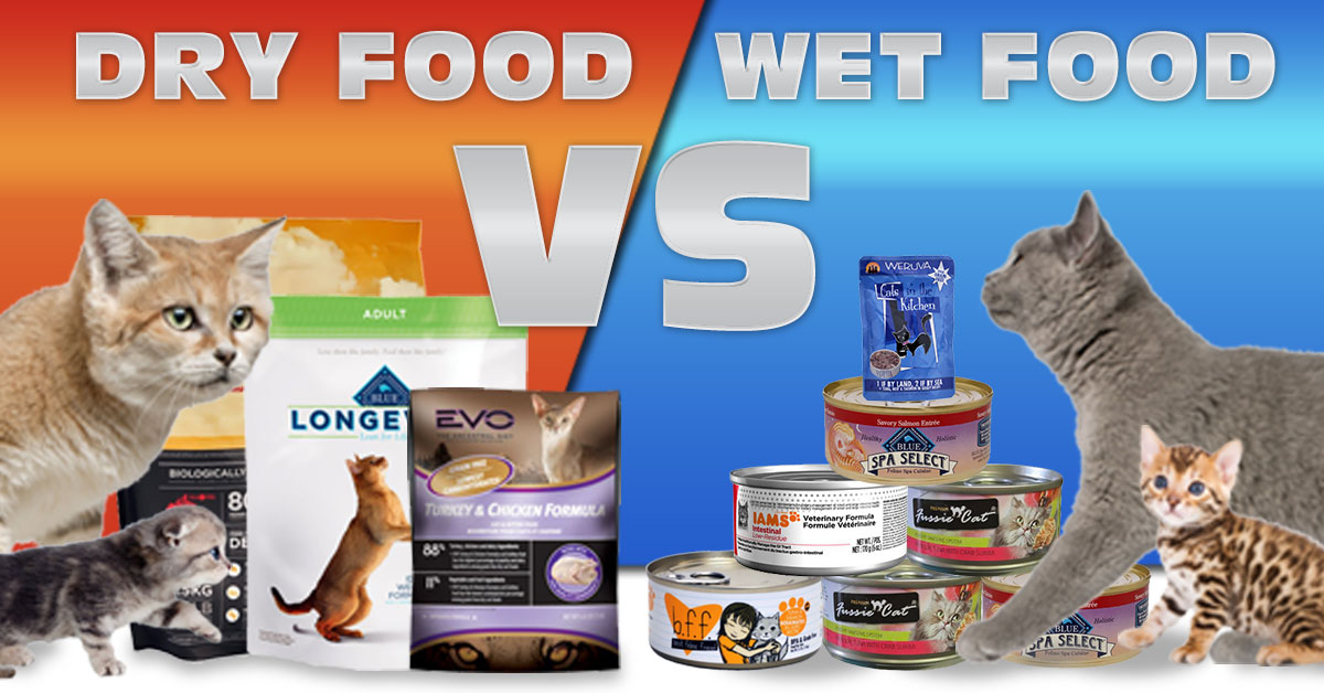 Innova Canned Cat And Kitten Food - Pets Wallpapers
