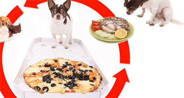 Next Steps If Your Pet Has Ingested Toxic Food
