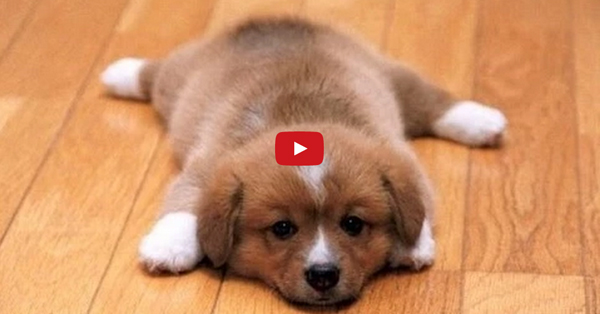 Dogs Slip On Hardwood Entirelypets