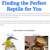 link to     Finding the Perfect Reptile for You