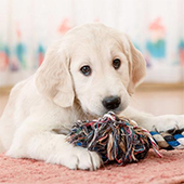 link to Finding Pet Friendly Housing