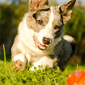 link to Flea, Tick & Heartworm Prevention