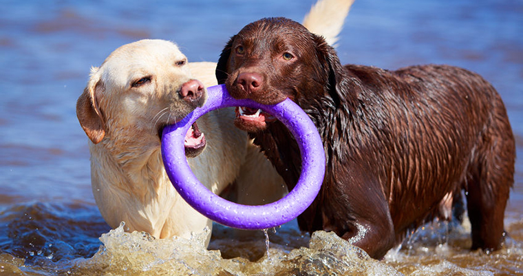 A image of 2 dogs playing in the beach