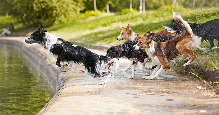 A image of dogs ruuning in to water
