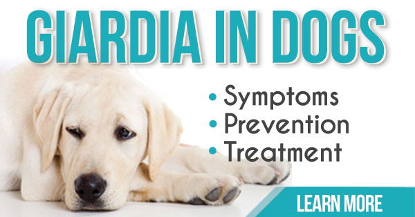 Giardia In Dogs Symptoms Prevention Amp Treatment