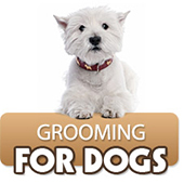 link to  Grooming Your Dog