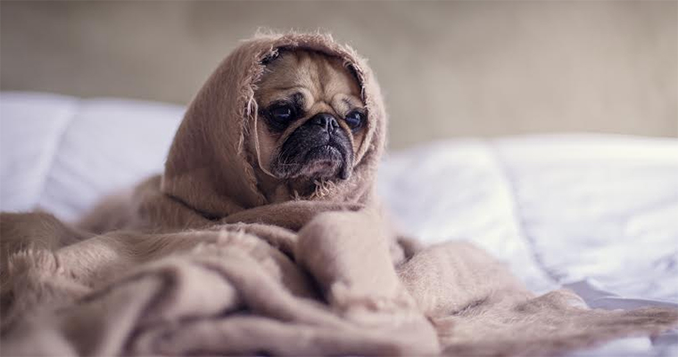 A image of a dog in blanket