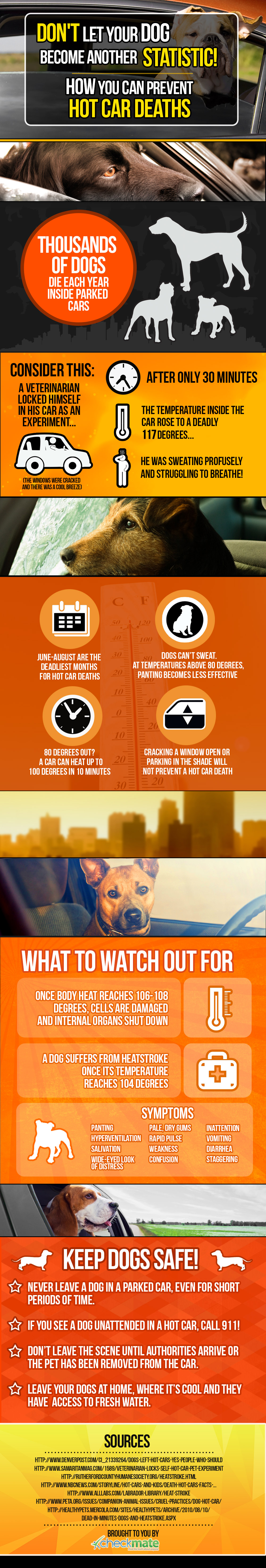 Dogs Are Dying in Hot Cars - How to Save Them [Infographic]