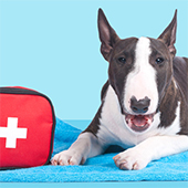 link to How To Assemble Your Pet's First Aid Kit