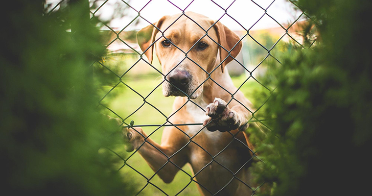 A image of a dog behind the fence