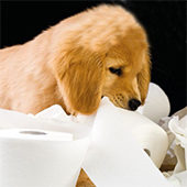 link toHow To Potty Train Your Puppy