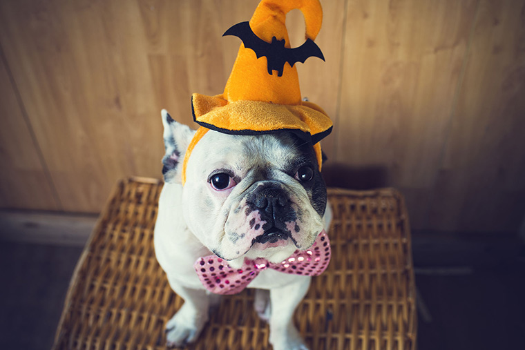 Preparing Your Pet For Fall