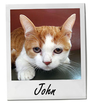 Pet of the Week photo