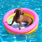 link to Know These 5 Summer Pet Care Tips
