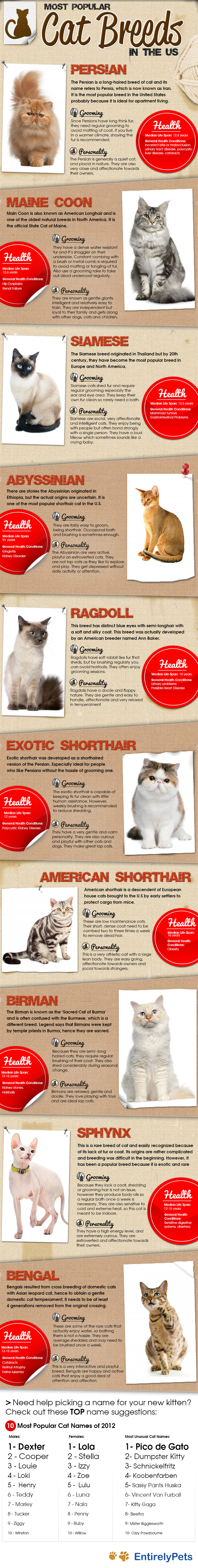 Most Popular Cat Breeds in the US