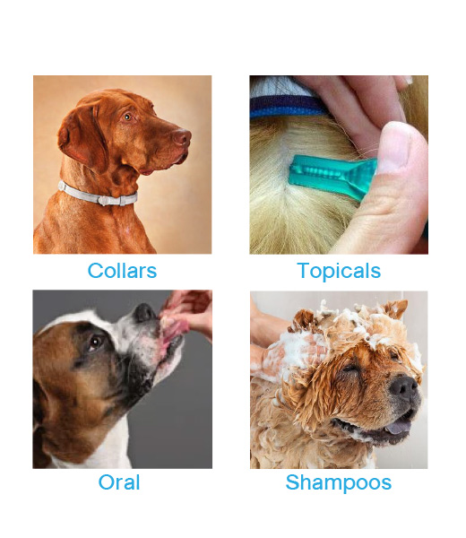 graphic about Seresto Collar Printable Coupon identified as Ease flea technique for canines discount codes