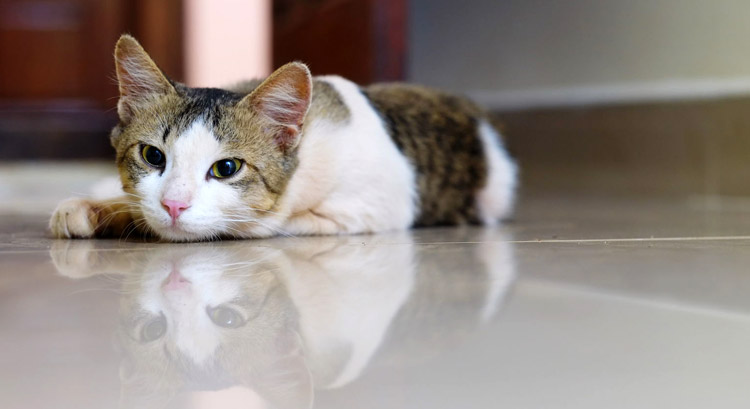 Making Your Home Pet Friendly