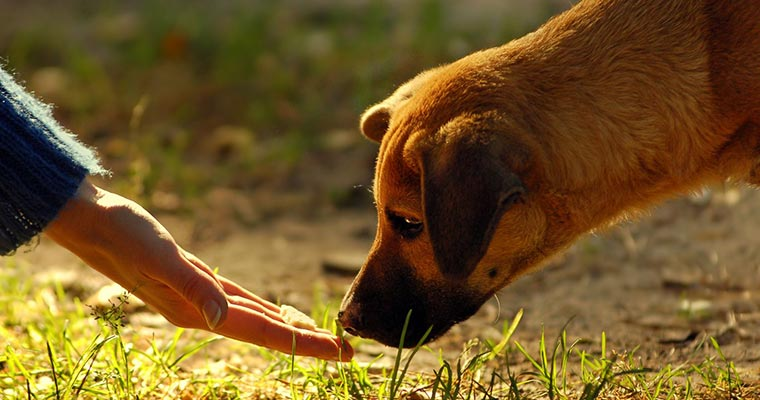 A image of a dog smell a person's hand