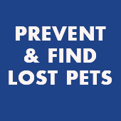 link to Do's & Don'ts of a New Pet and Kids