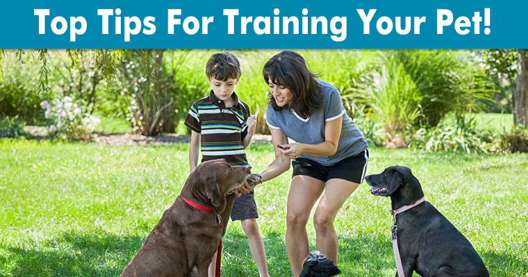 Pet Training Tips