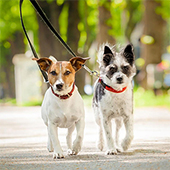 link to  Popular Outdoor Activities for Pets