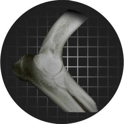 x-ray of canine knee by Flex Rx