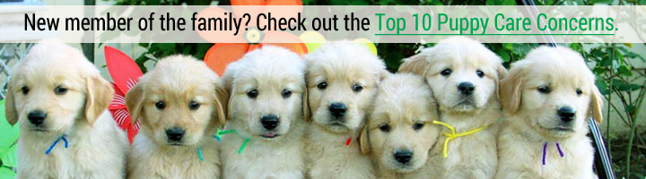 New member of the family? Check out the Top 10 Puppy Care Concerns?