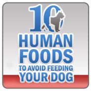 10 Human Foods to Avoid Feeding Your Dog