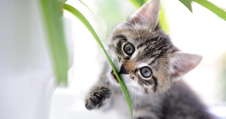 A image of a cute cat