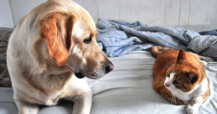 A image of a dog and a cat look at each other