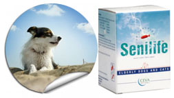 Ceva Sante Animale Senilife