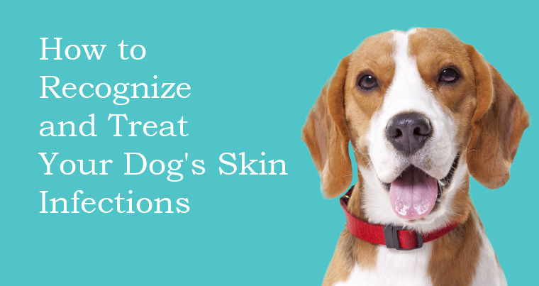 How to Recognize and Treat Your Dog's Skin Infections