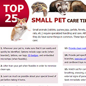 link to Small Pet Care Tips