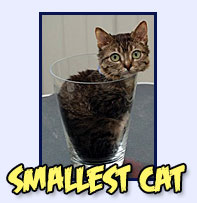 Smallest Cat