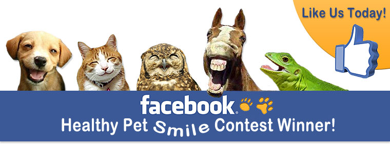 Facebook Pet Smile Contest Winner!