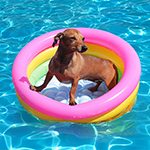Know These 5 Summer Pet Care Tips