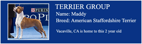 Terrier Group