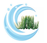 Tetra Water Wonders FW Plant Hairgrass 9""