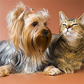 The Secret to Keeping pets Calm & Well-Behaved