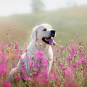 link to Tips to Care for Your Allergic Pet