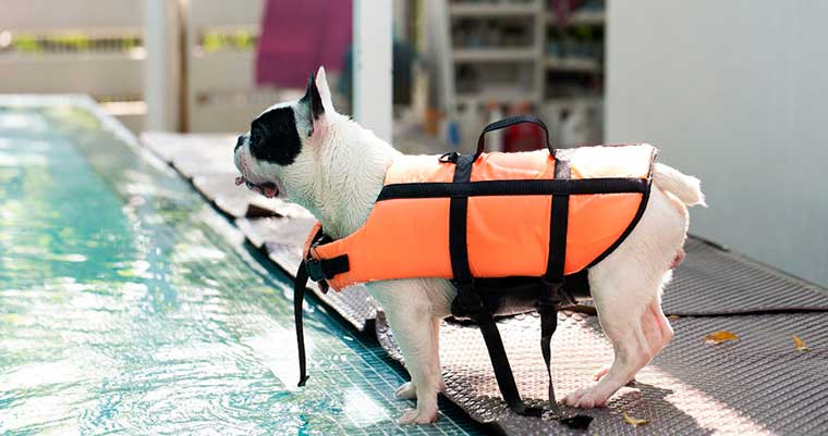 A image of a dog ready to jump into the water